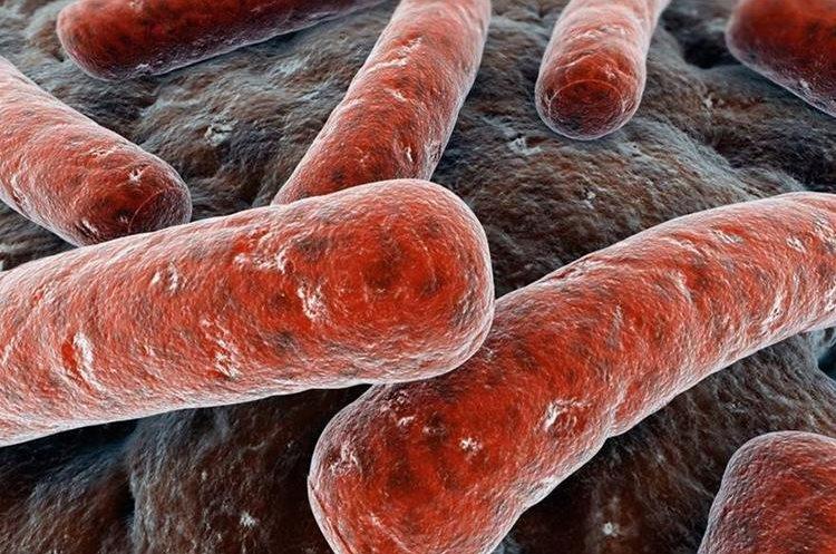 La bacteria Mycobacterium tuberculosis, es la causante de la enfermedad, la cual afecta principalmente a los pulmones. (Foto Prensa Libre: Hemeroteca PL)