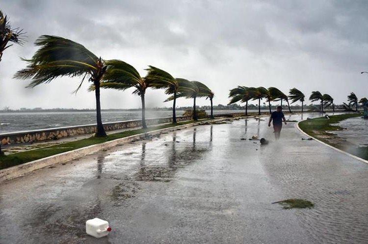 La fuerza del viento azotando contra las palmeras en el Malecón de La Habana. (Foto Prensa Libre: AFP)