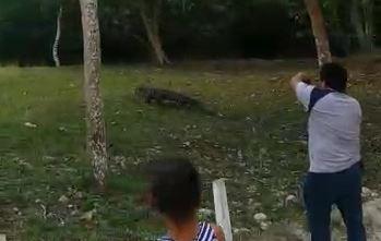 Turistas nacionales y extranjeros fotografían al cocodrilo que se había salido de su hábitat. (Foto Prensa Libre: Tomada del video)