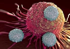 En el 65 por ciento de las mutaciones cancerígenas resultaron de los errores en la replicación del ADN, según el estudio.