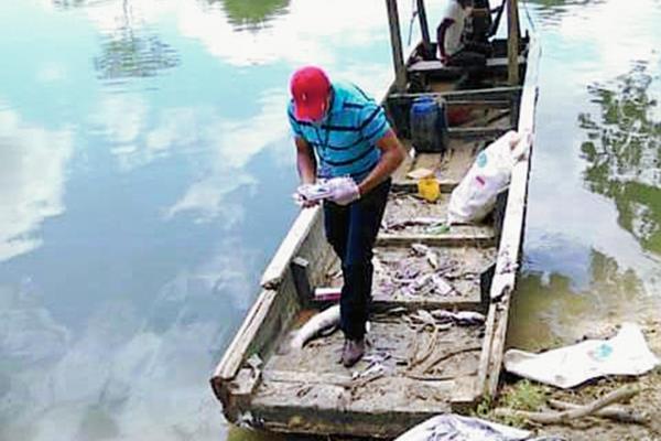 Pescadores de Sayaxché reportan alta mortandad de peces en el río La Pasión. (Foto Prensa Libre: Rigoberto Escobar)