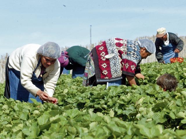 Microcréditos son solicitados en su mayoría por mujeres a través de bancos comunales. (Foto Prensa Libre: Hemeroteca)