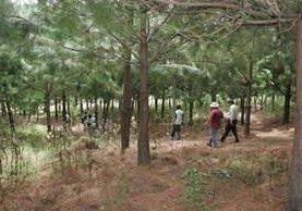 En Sololá, donde funcionan dos programas del Inab, se han recuperado cinco mil hectáreas de bosque en los últimos 15 años. (Foto Prensa Libre: Hemeroteca PL)