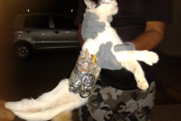"""<p>Un agente muestra el gato, equipado con cuchillas y un télefono. (Foto: tomada de Bol)<br _mce_bogus=""""1""""></p>"""