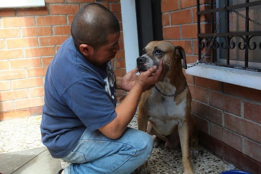 Herbert Laínez acaricia a Chiquitín, el perro que quedó atrapado en el incendio y fue rescatado por los bomberos. (Foto Prensa Libre: Álvaro Interiano)