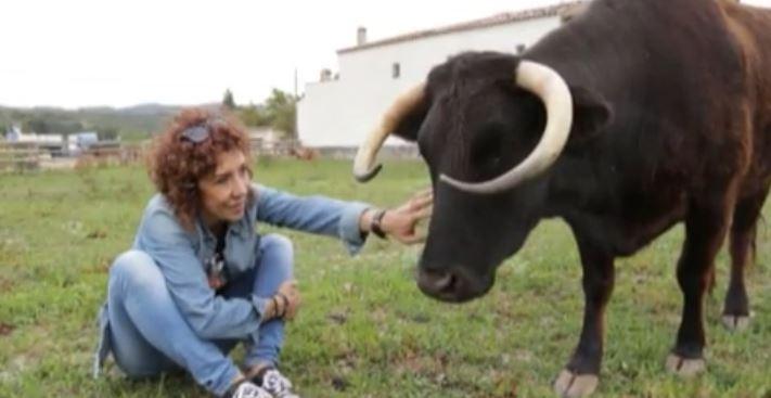 """La vaca """"Margarita"""" podría ser sacrificada si los propietarios no presentan documentación legal. (Foto Prena Libre: 20 Minutos)"""