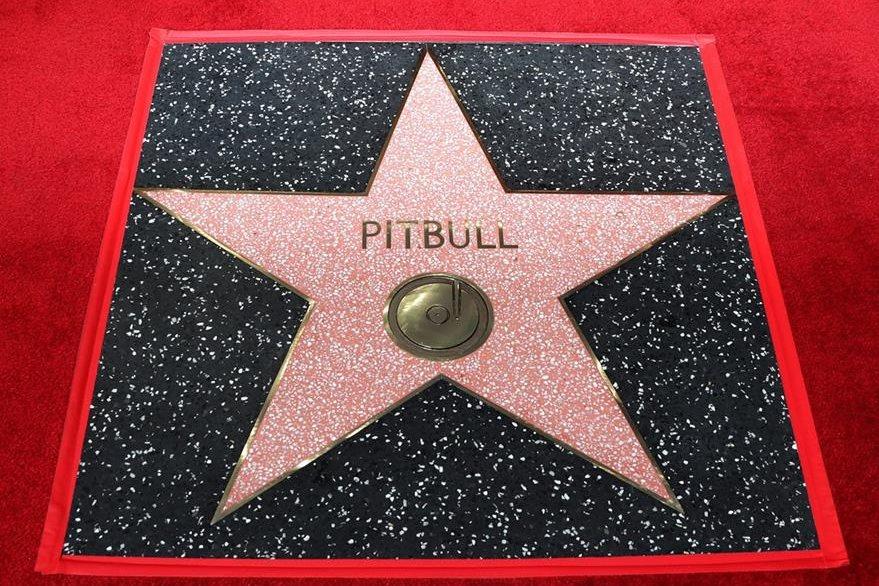 Esta es la estrella que puso Pitbull en el Paseo de la fama en Hollywood. (Foto Prensa Libre: AP)