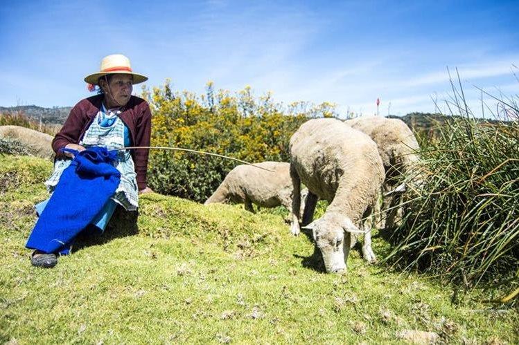 Los pastores de ovejas se enfrentan a la soledad. En la imagen, María López y parte de su rebaño. Foto Prensa Libre: Roberto Villalobos Viato.