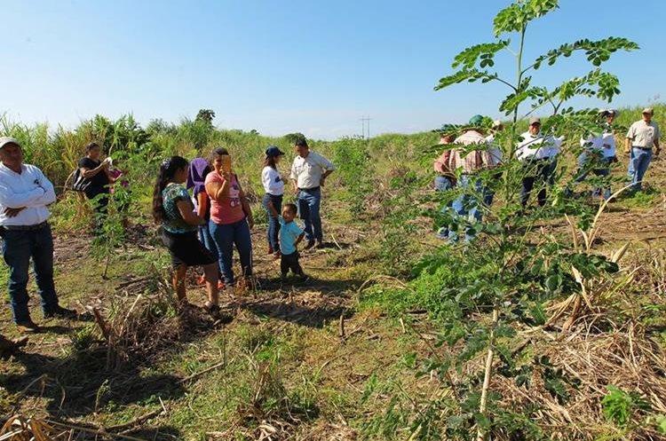 Proyecto de reforestación en un ingenio, ubicado en la cuenca del río.