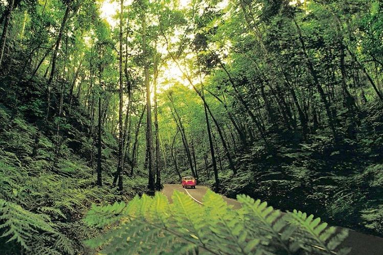 El interior insular ofrece otros paraísos al alcance de la mano como escarpados paisajes selváticos.