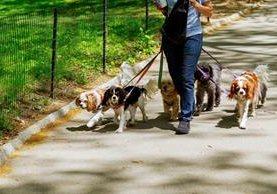 La tecnología avanza a pasas agigantados, por lo que ahora hay una aplicación que establece los lugares a donde sacaron a pasear a tus perros. (Foto Prensa Libre: Shutterstock)