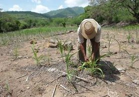 Un campesino de San Jorge, Zacapa, trabaja la tierra para poder obtener recursos y alimentar a su familia. (Foto HemerotecaPL)