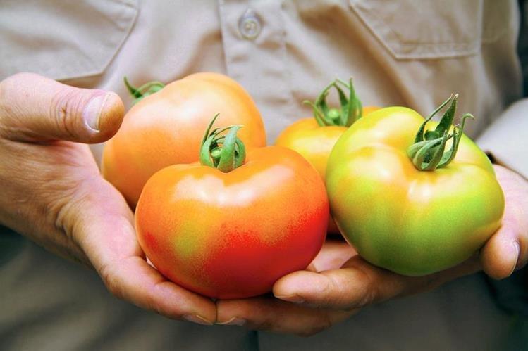 El licopeno , contenido en el tomate, es un antioxidante que ayuda a reducir el riesgo de padecer enfermedades degenerativas. (Foto Prensa Libre, Walmart)