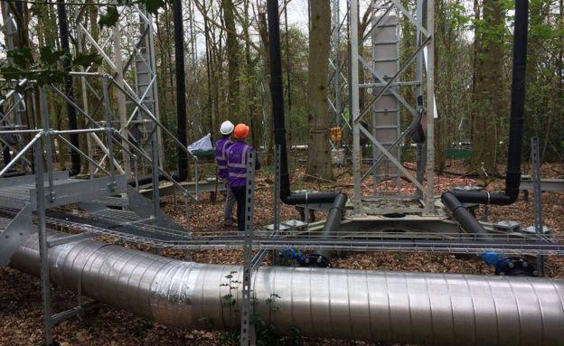Más de 100 mástiles de 25 metros de altura fueron instalados en el bosque Mill Haft. GETTY IMAGES