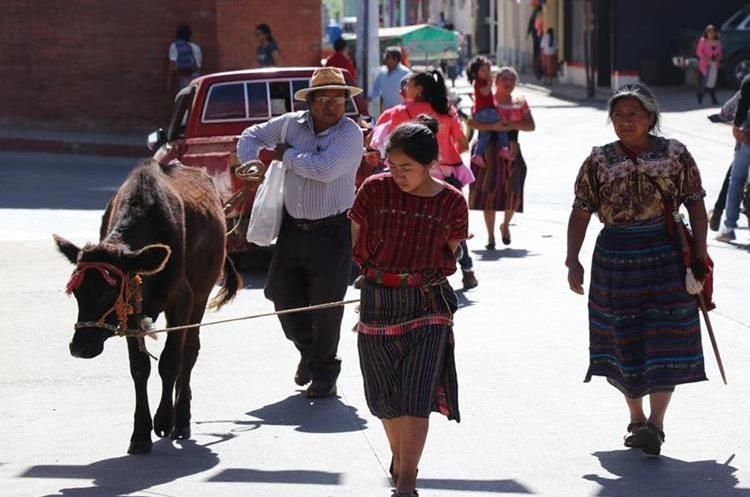Antes del castigo, Juana Salvador recorrió las calles de Santa Cruz del Quiché junto a la vaca que había robado. PRENSA LIBRE / HÉCTOR CORDERO
