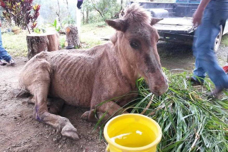 Personas brindaron alimentos al animal. (Foto Prensa Libre: Tomada de Facebook).