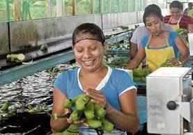 Siete de cada 10 migrantes laborales guatemaltecos en México se emplean en las actividades agropecuarias. (Foto Prensa Libre: Hemeroteca)