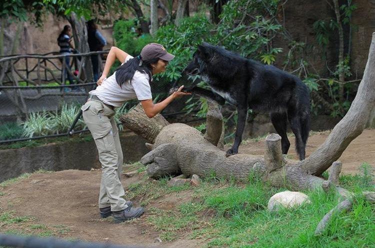 Lourdes Fernández indica que le apasiona cuidar lobos