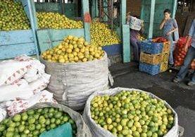 La oferta de limón se redujó en el mercado, lo que generó presión hacia el alza, según comerciantes del mercado La Terminal. (Foto Prensa Libre: Hemeroteca PL)