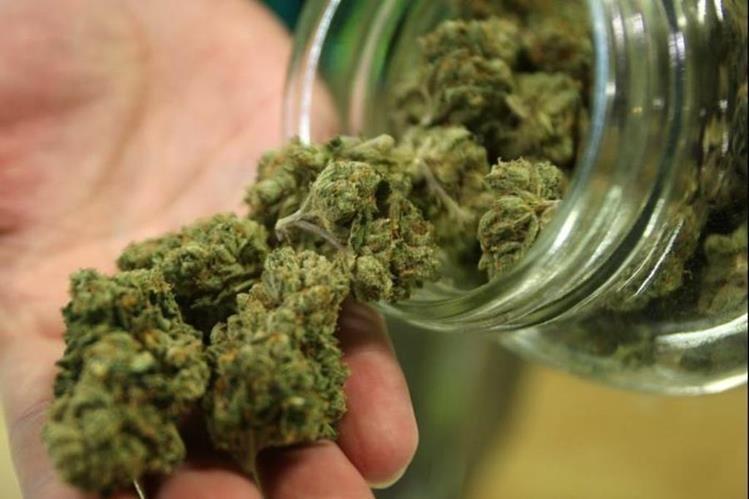 El gobierno ha licitado la producción del cannabis recreativo. (Foto Prensa Libre: ayayay.tv)