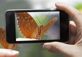 ¿De qué especie se trata? Con esta app, podrás saberlo de inmediato. GETTY IMAGES