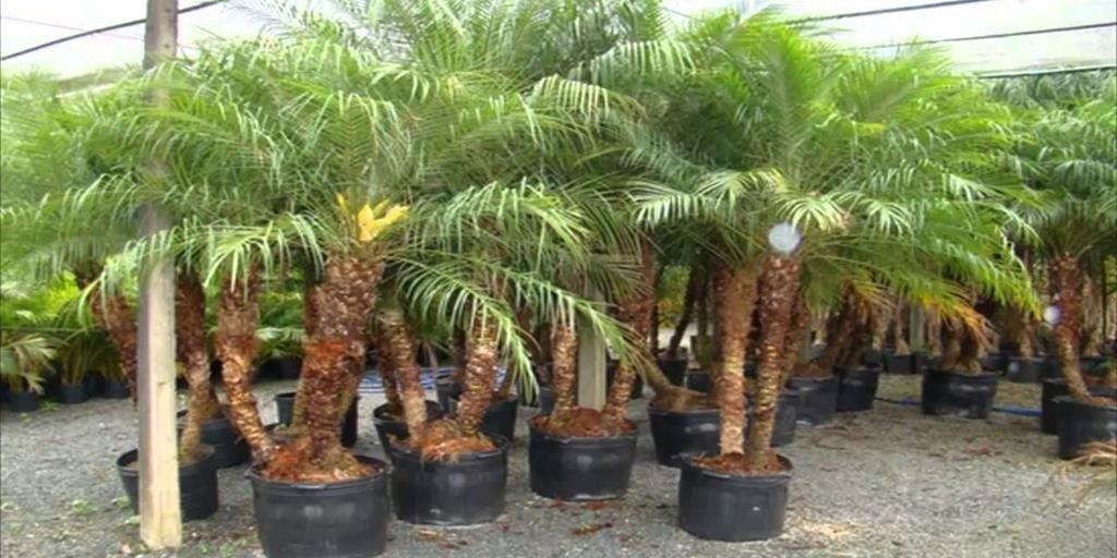 Costa rica toma medidas tras cierre de mercado europeo a for 6 plantas ornamentales