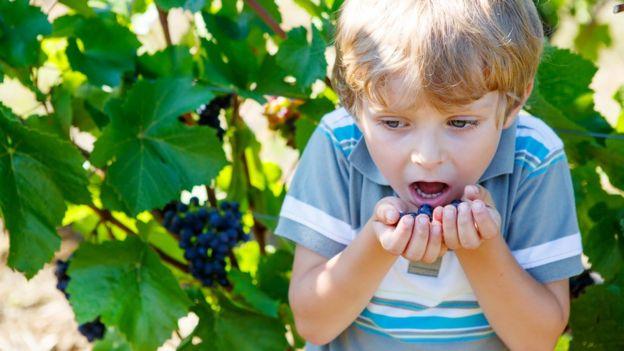 Las uvas son una de las principales causas de ahogamiento infantil en EE.UU. y Canadá. (Foto, Thinkstock)