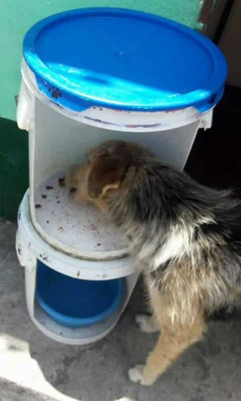 Perros abandonados han encontrado un lugar para comer en San Miguel Dueñas.  (Foto Prensa Libre: Julio Hernández)