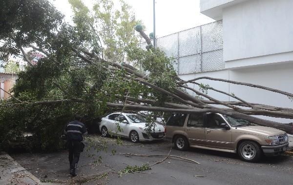 Un árbol fue derribado por el fuerte viento y cayó sobre un auto en la Ciudad de México. (Foto Prensa Libre:EFE).