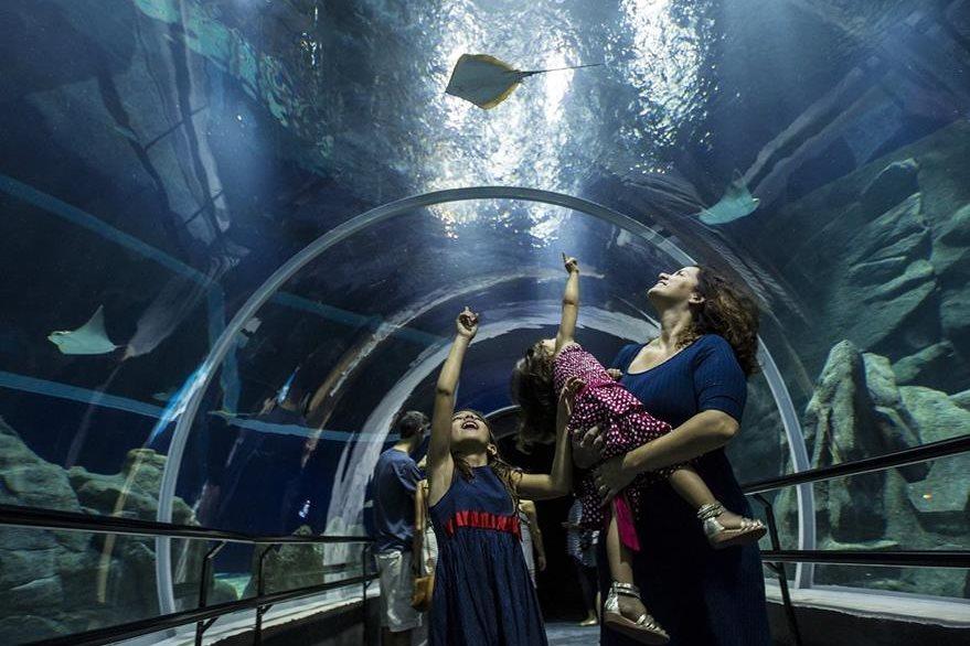 AquaRío tiene la capacidad de recibir mil visitantes en un día. (Foto Prensa Libre: EFE).