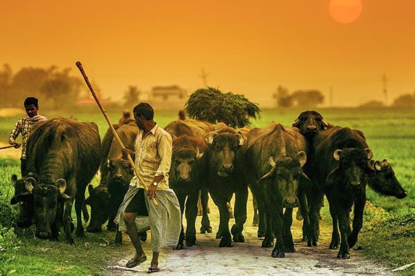 Varanasi se puede apreciar en la Casa del Té, del zoológico La Aurora. (Foto Prensa Libre: Carlos López Ayerdi)