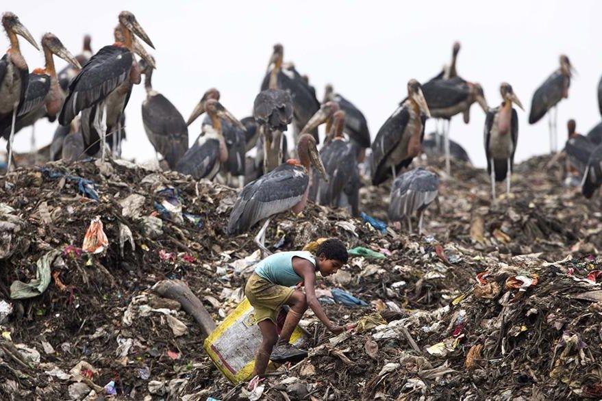 Un adolescente indio se esfuerza por reciclar diferentes mnateriales reciclables en un enorme basurero en su país. La mirada de las aves de rapiña por momentos, parece que amenazan al pequeño. (Foto Prensa Libre: AP).
