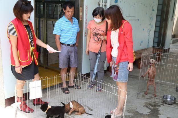 El número de perros abandonados que han sido adoptados en Taiwán ha aumentado en los últimos años.