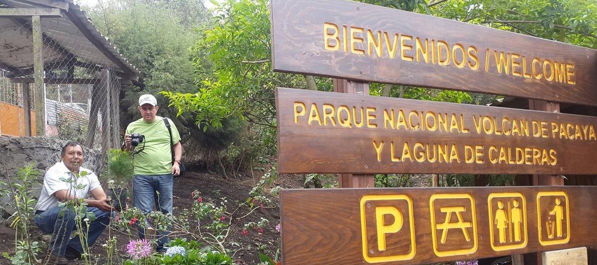 Los árboles donados serán sembrados en el Parque Nacional Pacaya. (Foto Prensa Libre: Guate Passport)