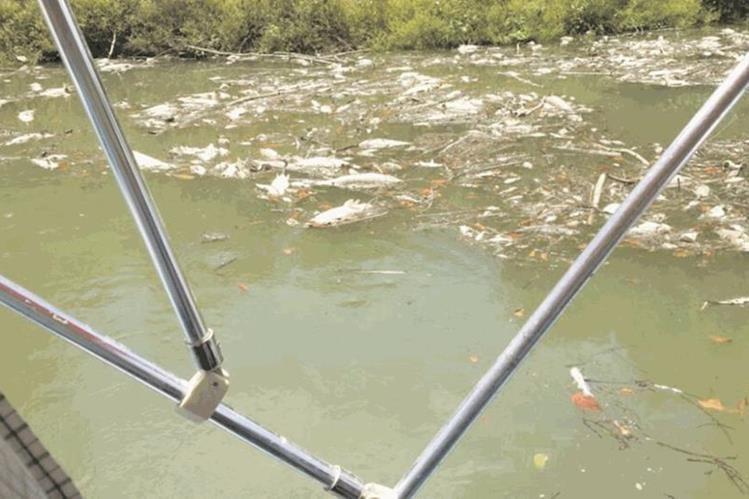 El año pasado la mortandad de peces en el Río La Pasión afectó más de 185 kilómetros río abajo, desde el foco de contaminación, y fue catalogada como ecocidio. (Foto Prensa Libre: Hemeroteca PL)
