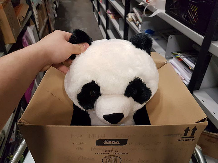 El panda fue escondido en una caja, donde el niño escribió la nota. (Foto Prensa Libre: David Bateman)
