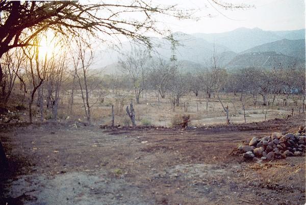 La deforestación deja sin protección el suelo. (Hemeroteca PL).