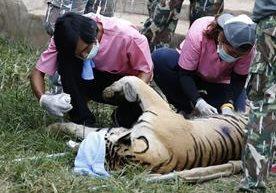 Tailandia rescata a 137 felinos de templo budista.