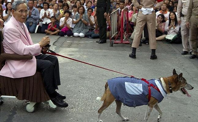 El monarca de Tailandia, Bhumibol Adulyadej, posa con Thong Daeng ante la prensa.