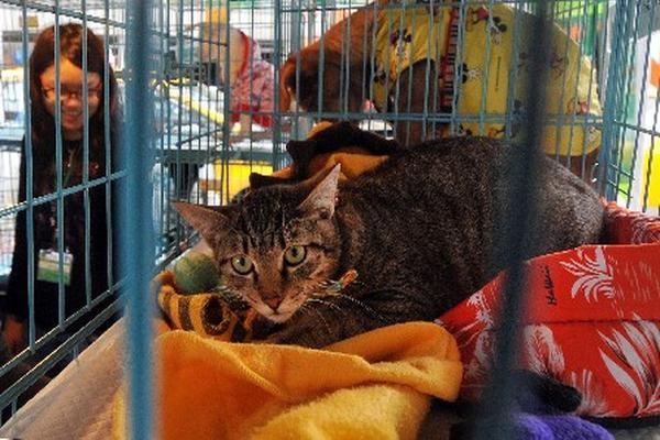 <p>Los propietarios de los animales fueron acusados por maltrato infantil y crueldad animal.</p>