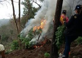Los elementos antinarcóticos quemaron las plantas encontradas en Amatitlán. (Foto Prensa Libre: Cortesía)