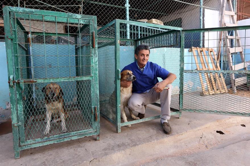 """Jalal socorrió a unos 250 animales domésticos, entre ellos """"gatos y perros"""",tortugas, conejillos de Indias y un loro. (Foto Prensa Libre: AFP)."""