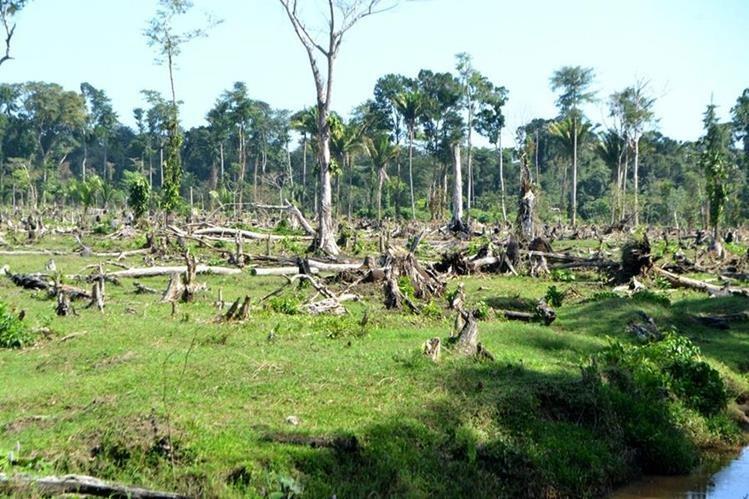 Pobladores denuncian tala de árboles en Punta de Manabique, Puerto Barrios, Izabal. (Foto Prensa Libre: Dony Stewart)