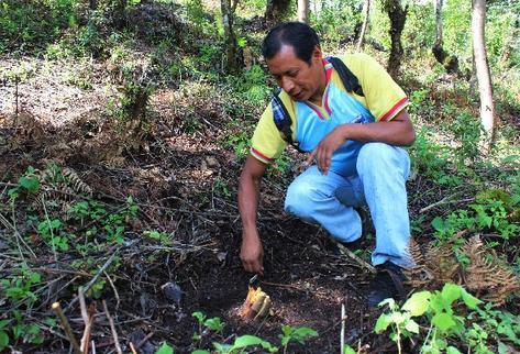 Alejandro Napoléon Utz, líder de los expatrulleros, muestra un árbol cortado en un bosque depredado de San Andrés Itzapa, Chimaltenango.