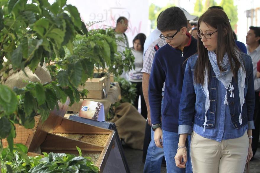 Durante el Coffee Weekend los asistentes pueden conocer sobre cómo se produce el café guatemalteco. (Foto Prensa Libre: Carlos Hernández)