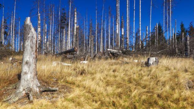 El efecto de la lluvia ácida en los ecosistemas es devastador. THINKSTOCK