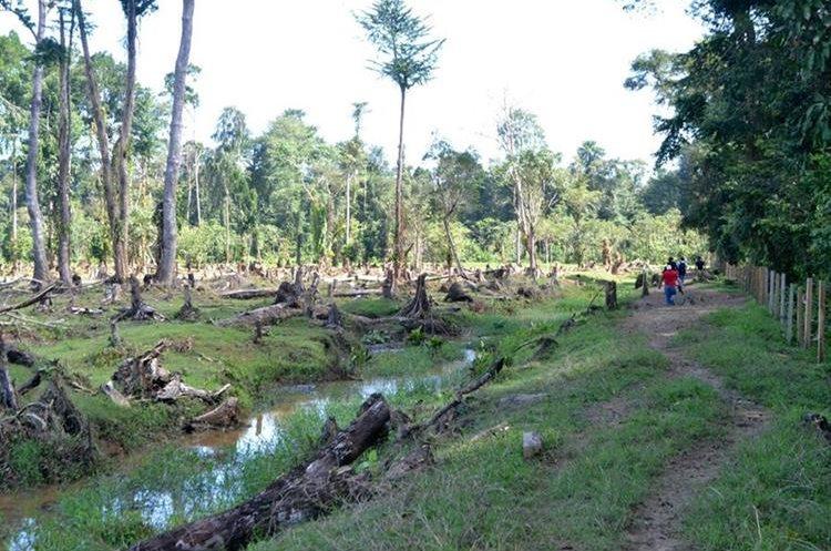 Autoridades inspeccionaron el área donde pobladores denunciaronn tala en Punta de Manabique. (Foto Prensa Libre: Dony Stewart)