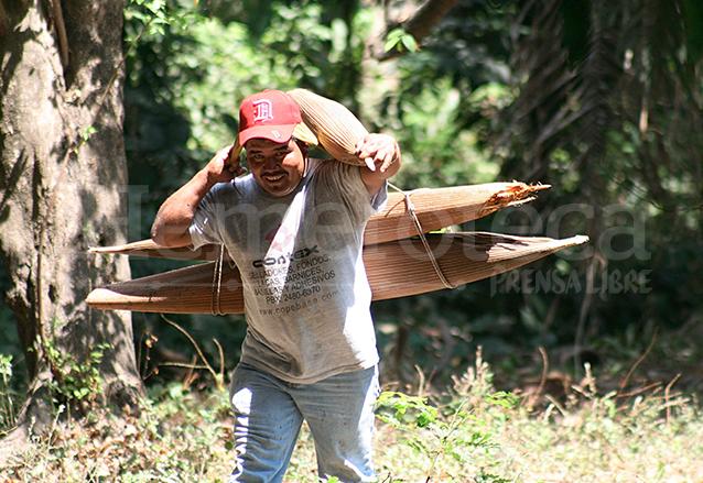 Las canoas de corozo también son comercializadas. (Foto: Hemeroteca PL)