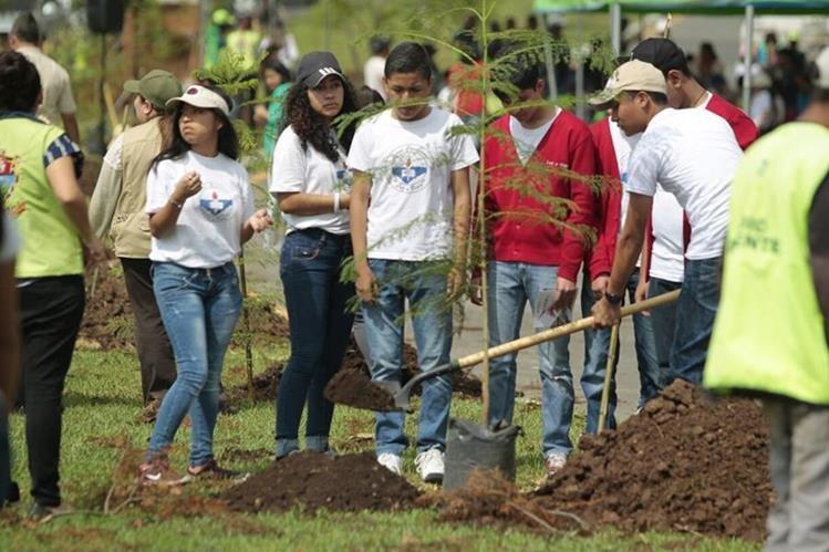 Entre las especies que fueron sembradas en el bulevar Juan Pablo II figuran jacarandas. (Foto Prensa Libre: Carlos Hernández Ovalle)