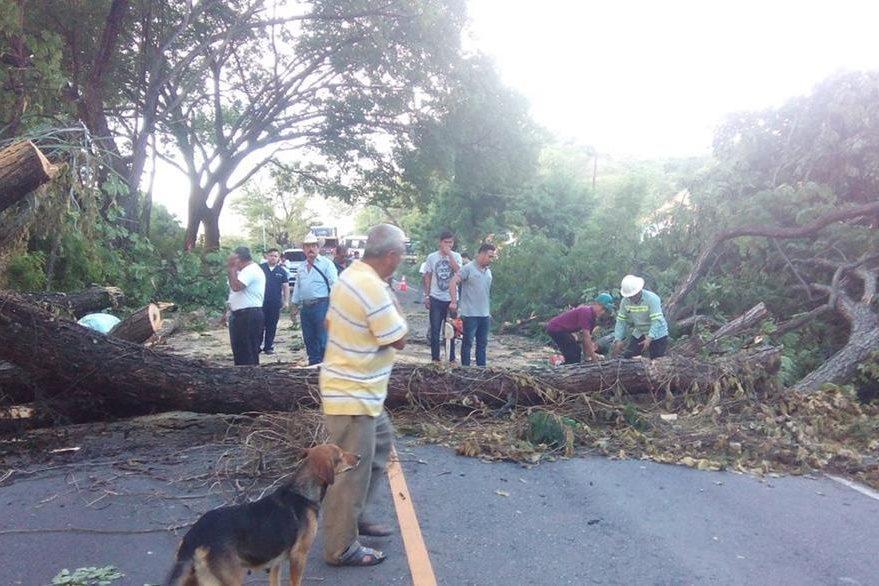 Un árbol impide el paso de vehículos en el km 151 de la ruta de Zacapa a Chiquimula. (Foto Prensa Libre: Víctor Gómez)